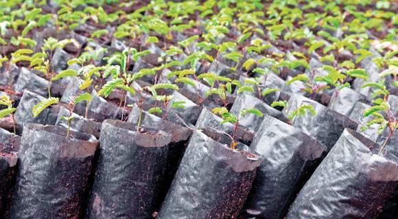 Amma.org: Green Initiatives