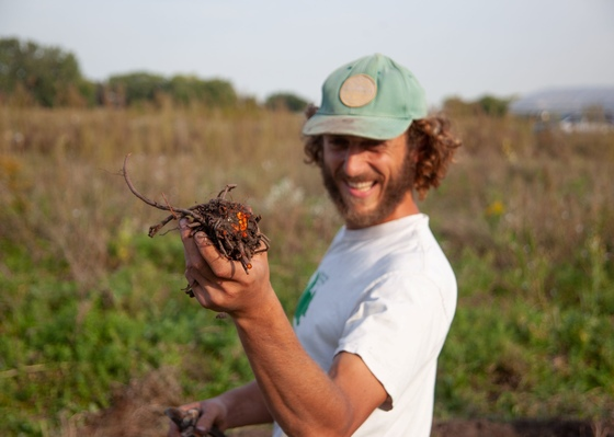 Man holding freshly harvested madder root in his hand