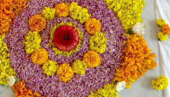 Onam pookkalam (design made with fresh flower petals)