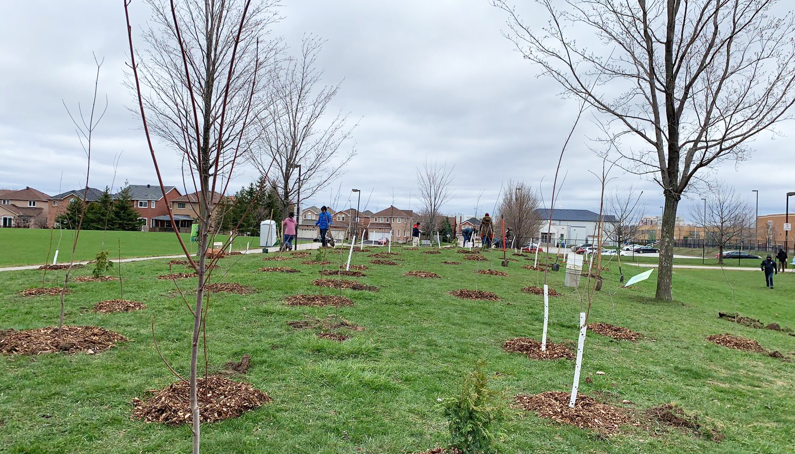 Trees planted at Willowvale park