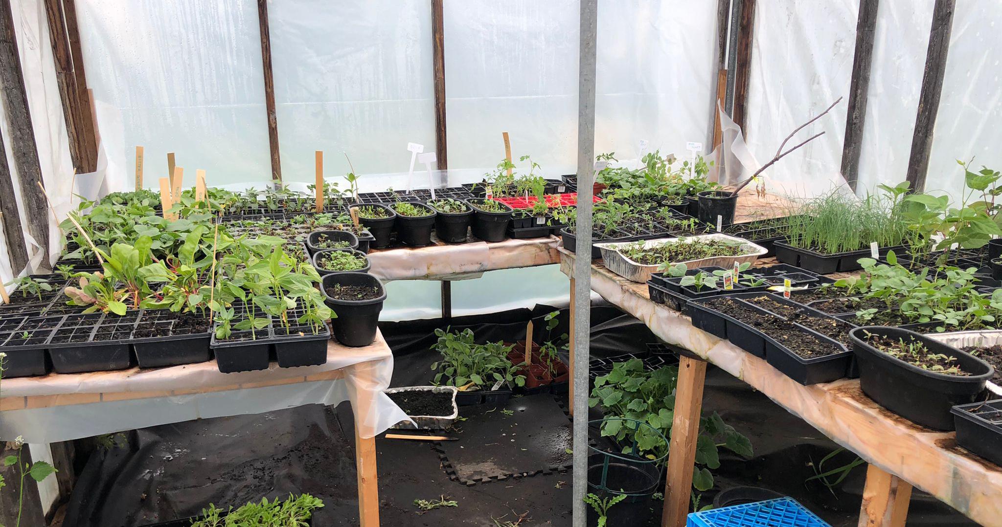Veggie seedlings in the greenhouse