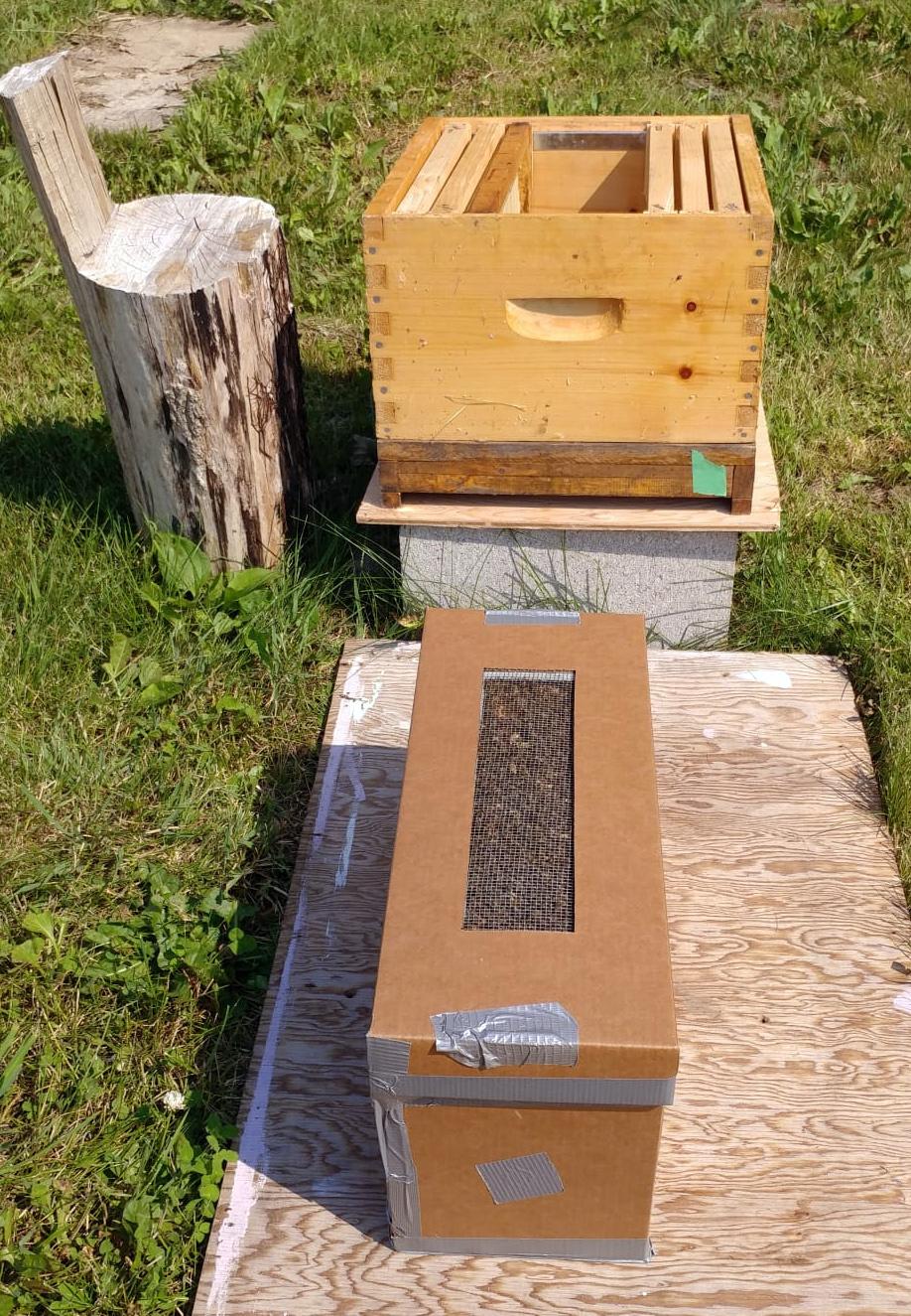 New hive in cardboard box